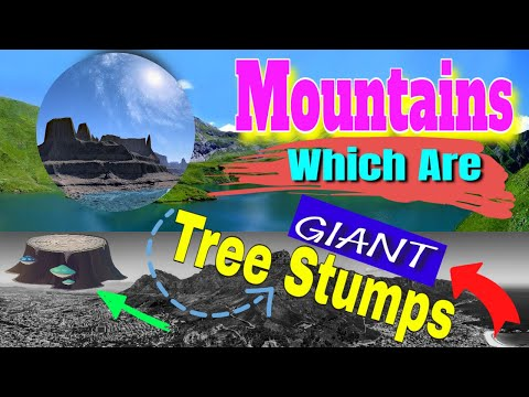 Mountains Which Are Ancient Giant Tree Stumps