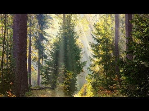 Peaceful music, Relaxing music, Instrumental music 'Through the Trees' Nature With Music by Tim Janis