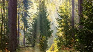 "Peaceful music, Relaxing music, Instrumental music ""Through the Trees"" Tim Janis"