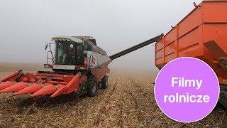Dwa kombajny Rostselmash i traktor Massey Ferguson w akcji