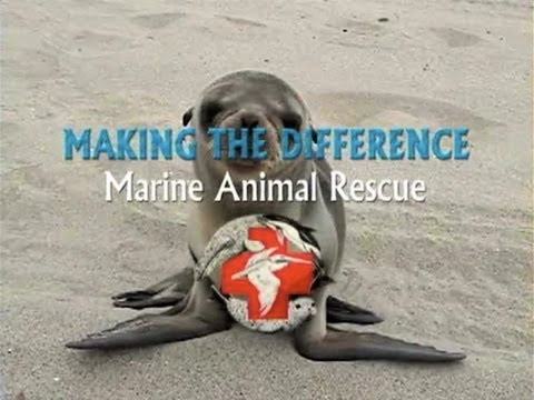 Making The Difference - Marine Animal Rescue