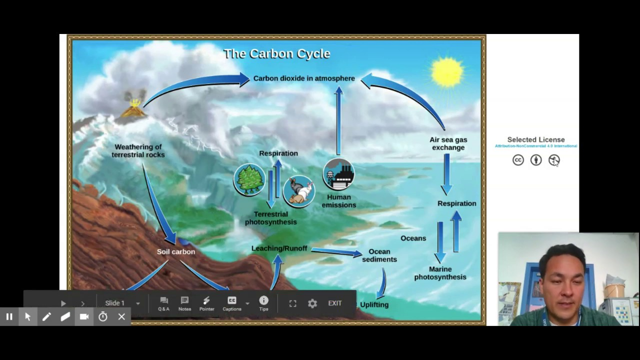 Carbon Cycle Reservoirs And Flows