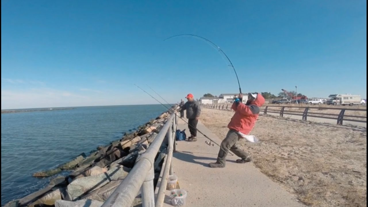 Nov2016 tog fishing at indian river inlet de youtube for Indian river inlet fishing report