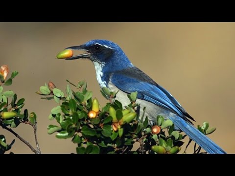 On Beyond: Anu Mupparthi Future Agriculture Channel Island Jays