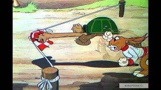 Кролик и черепаха, соревнование в скорости достижения финиша