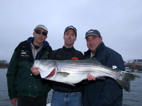Striped Bass Fishing - Rockaway, NY