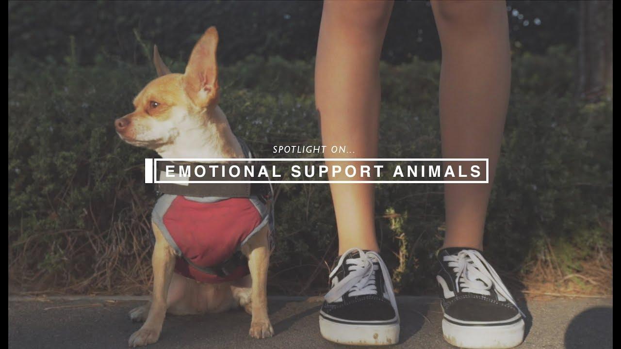 Spotlight: Emotional Support Animals