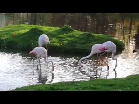 Netherlands: Flamingos enjoying the autumn sun