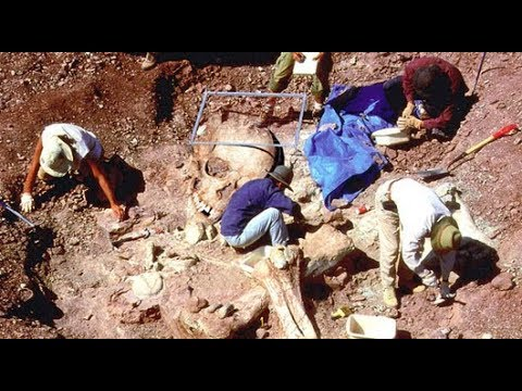 Cemetery Of 'Giants' Found In Central Africa