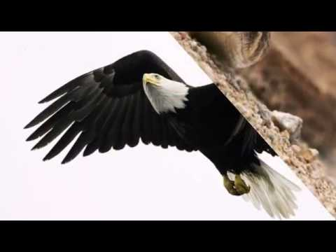 AMERICAN SAFARIS BEST PLACES  to see WILDLIFE in the U S