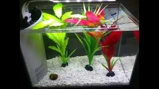 Top fin 5 gallon aquarium/fish tank review