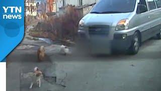 [앵커리포트] 도로에 개 있어도 그대로 달린 승합차...동물단체