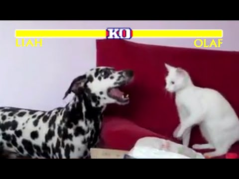 Street fighter cat vs dog