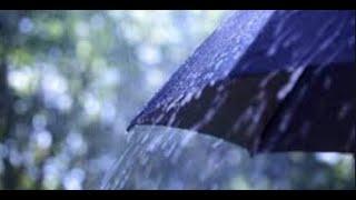 10.05.2020 Первый дождь