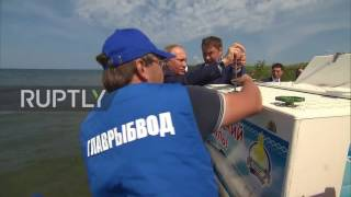 Russia  Plenty more fish in the sea? Putin releases thousands of Omul fish into Lake Baikal