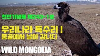 우리나라 독수리는 몽골에서 날아갑니다 | 별 그리고 초…