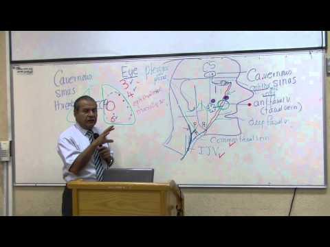 Anatomy 30th lec Dr. Wajih | pt2