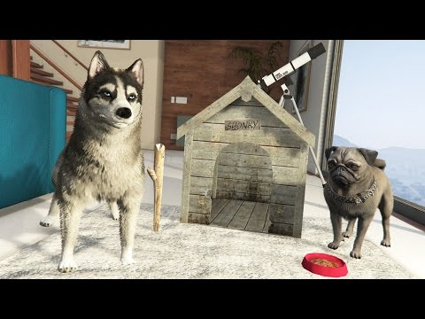GTA 5 Real Life Mod #28 - Pet Store, Mr. Scruffles New Friend & MORE!! (GTA 5 Mods Gameplay)