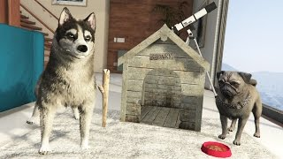 GTA 5 Real Life Mod #28 - Pet Store, Mr. Scruffles New Friend & MORE!! (GTA 5 Mods Gameplay)
