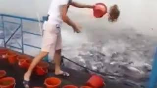 Кормление рыбы в Тайвань