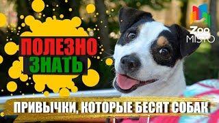 Полезно знать с ZooMISTO | Привычки, которые бесят собак