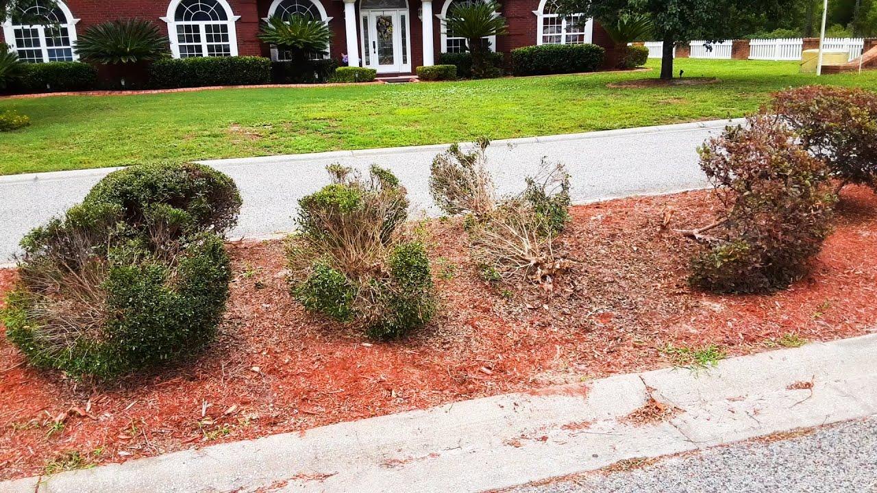 Neighborhood Entrance Vandalized (Damaged Shrub Removal & Replacement)
