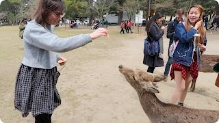 Feeding Deer in Nara, Japan | Evan Edinger Travel