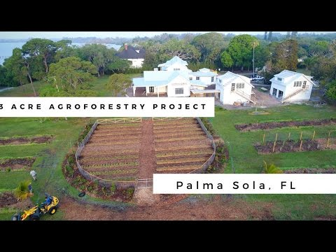 3 Acre Food Forest - Agroforestry Project Gulf Coast Florida