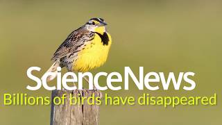 Billions of birds are vanishing from North America | Science News