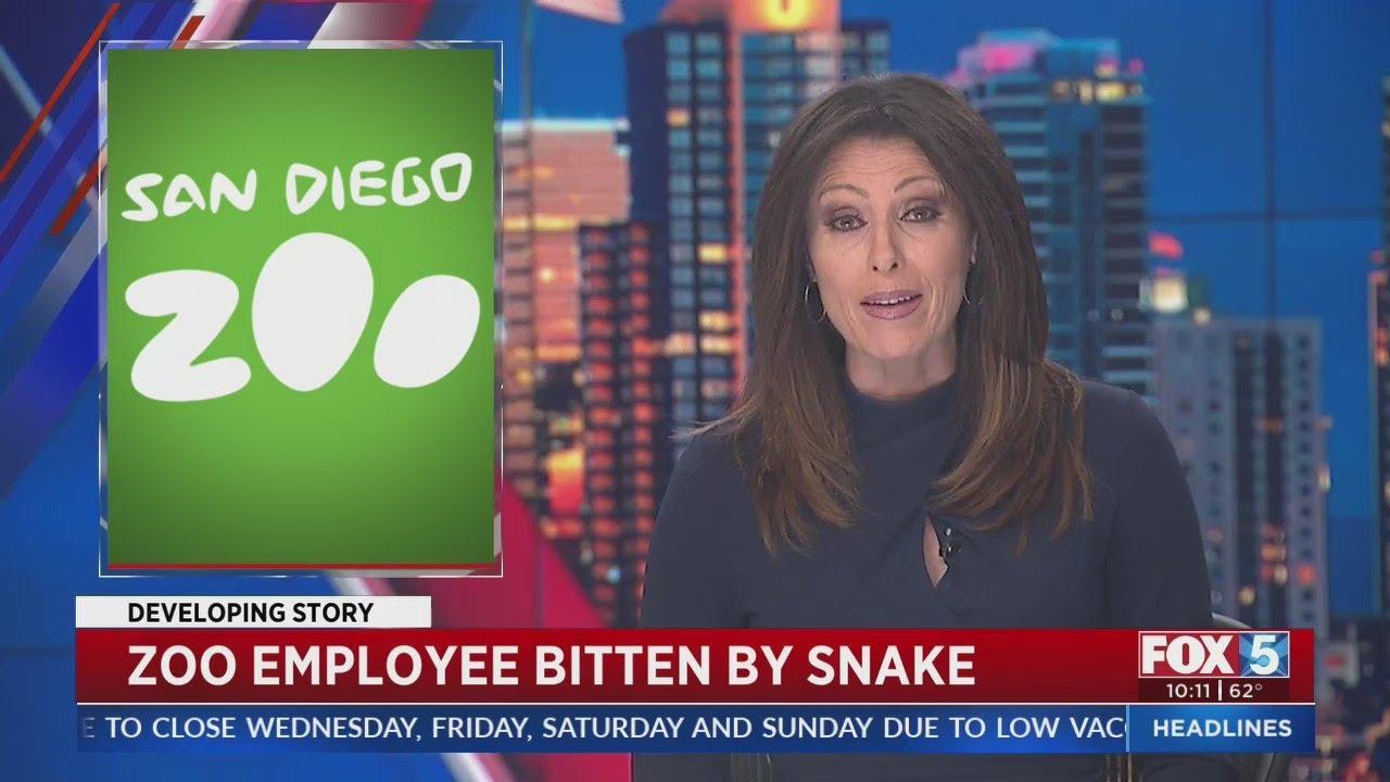 San Diego Zoo worker bitten by venomous snake