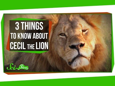 3 Things to Know About Cecil the Lion