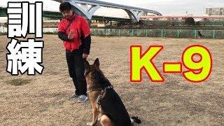 grandchild and #GermanShepherd#シェパード犬#犬訓練 フレンドリー犬を...