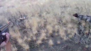 Охота на зайца 2015! Прикольный момент)))(Охота на зайца осенью. Ростовская область., 2015-11-25T15:05:29.000Z)