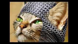Лучшие коты в Мире.Прикол.(Право з/записи:[Merlin] The State 51 Conspiracy