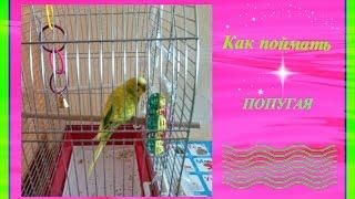 VLOG:Как поймать попугая//Волнистый попугай//Уход за попугаем