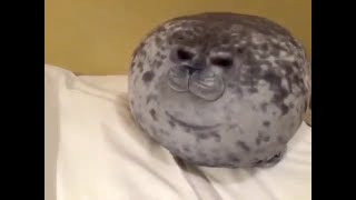 Fat Seals Being Cute! [40 Subs Special Compilation]