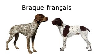 80  Braque français