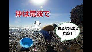 【ガサガサ】大波で浅瀬のタイドプールが凄かった