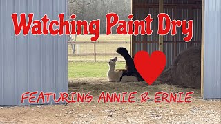 Watching Paint Dry with Annie and Ernie!