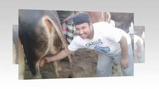 Cow | How Cow | Cow Show | Eid ul Adha | Qurbani Cow | Bangladesh