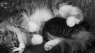 Серая кошка и котенок