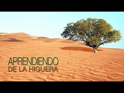 061 APRENDIENDO DE LA HIGUERA / OMAR HERNANDEZ