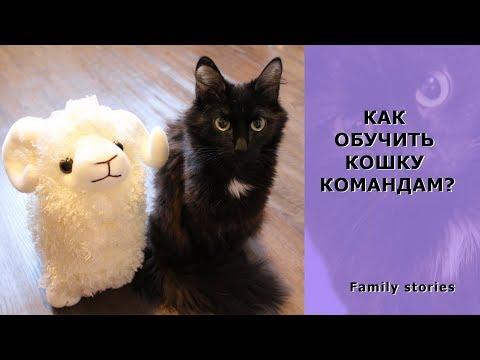 Вопрос: Как обучить кошку выполнению трюков?