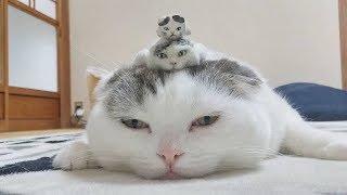Những Con Mèo Nguy Hiểm Nhất Hành Tinh #1