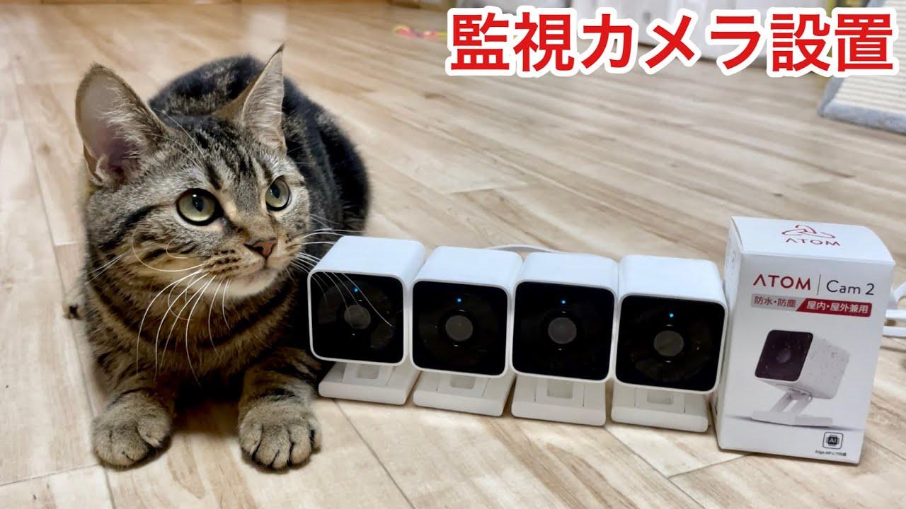 家で1人ぼっちの猫が心配なので監視カメラを設置します