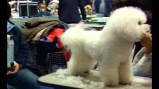 It has gone to the FCI Kanagawa international dog show of the Japan...
