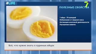 Всё, что нужно знать о куриных яйцах
