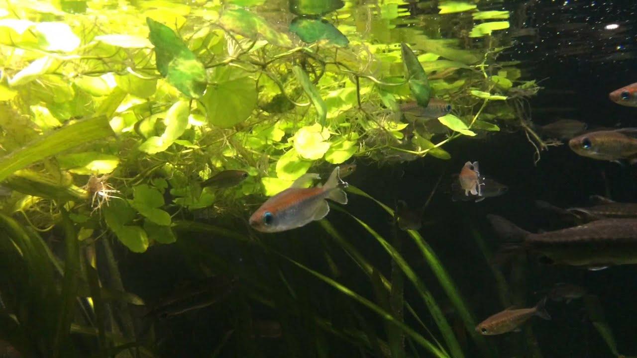 Buy fish for aquarium london - Zsl London Zoo Aquarium