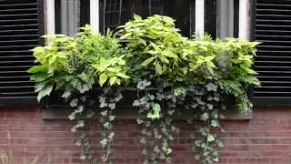 The Making Of An Autumn Window Box | Wisteria & Rose