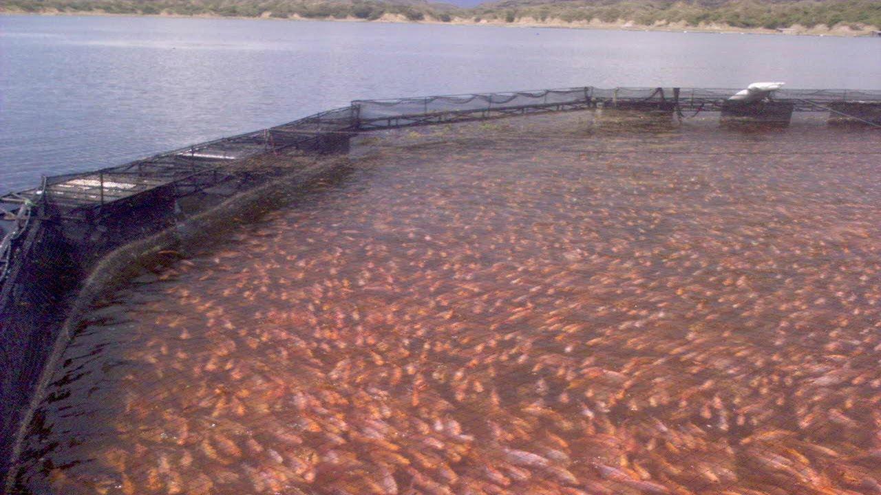Oxigenaci n mec nica para peces en represa de betania for Productos para estanques de peces